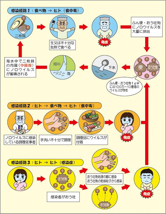 経路 ノロウイルス 感染